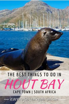 Hout Bay, a suburb in Cape Town, but the locals call it a Republic! A visit to C… Hout Bay, Visit South Africa, Cape Town South Africa, Travel With Kids, Family Travel, Le Cap, South America Travel, Africa Travel, Travel Destinations, Africa Destinations
