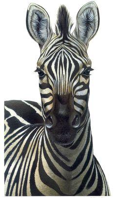 Hello there, Zebra Stripes, Animals, Animales, Animaux, Animal, Animais