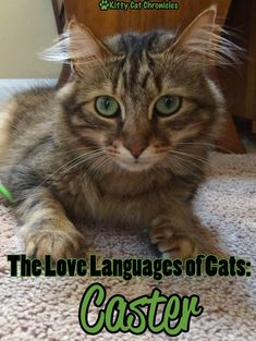 We are continuing our series on learning your cat's Love Language. Do you have a cat whose love language is complicated and hard to understand? Keep working to learn it, and we guarantee you will notice a stronger bond with your cat!