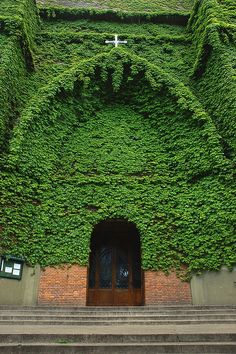 It is one of the most bizarre churches in the world as the external walls are covered with thick green plants and flowers, creating an impressive vertical garden in downtown of Buenos Aires in Argentina. The church Iglesia Jesús en el Huerto de Los Olivos is a model of environmental protection and green architecture. From the bell tower to the entrance, it all seems to have been covered by a natural green veil that surrounds the church.