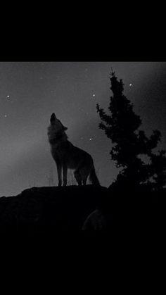Wolf, Batman, Tea, Superhero, Fictional Characters, Wolves, Fantasy Characters, Teas, Timber Wolf