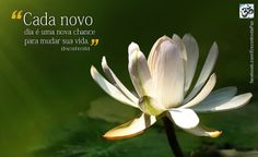 Encontro da Paz: Cada novo dia...
