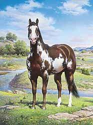 overo horses - Google Search