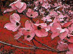 'Aufbruch ins Frühjahr' von Dirk h. Wendt bei artflakes.com als Poster oder Kunstdruck $18.03