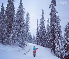 Snowboarding in Trysil, Hedmark, Norway. Norway's largest winter resort, Trysil offers perfect conditions for snowboarding, skiing, cross-country skiing ++