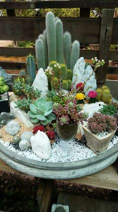 62 DIY Miniature Fairy Garden Ideas to Bring Magic Into Your Home Page 9 of 62 SooPush – succulent garden diy Mini Cactus Garden, Succulent Gardening, Cacti And Succulents, Planting Succulents, Planting Flowers, Cactus Flower, Indoor Gardening, Cactus Plants, Flower Pots