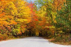 Túnel das árvores de outono - EUA: No caminho para o parque estadual Smuggler?s Notch, em Vermont, as árvores formam um belo cartão de visitas. Cobrindo parte da estrada, ganham colorido especial durante o outono, quando as folhas secas dão um tom amarelo à paisagem e forram o caminho