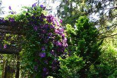 Linda Letters:: Powelswood Garden Clematis, Acre, The Neighbourhood, Letters, Garden, Plants, The Neighborhood, Garten, Lawn And Garden