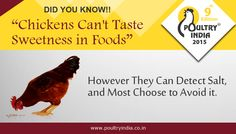 DID YOU KNOW??? Hit like if you agree...  Visit Poultry India 2015 Exhibition !!!! Get knowledgeable information about Poultry Industry. Register today for FREE Visitor Pass @ www.poultryindia.co.in