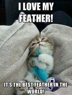 Awww Cute little kitten on a fluffy blanket cuddling a soft feather