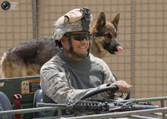 soldier drives a vehicle with his dog at the Forward Operating Base (FOB) Airborne in the mountains of Wardak Province, Afghanistan, July Military Working Dogs, Military Dogs, Police Dogs, Military Police, Army, Military Service, Fancy Dog Collars, Animal Heros, War Dogs