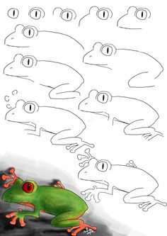 How To Draw a Frog by animands on DeviantArt