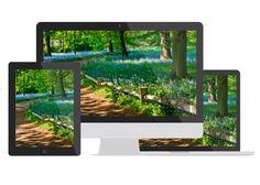 Bluebell Fiels in London's Kew Garden