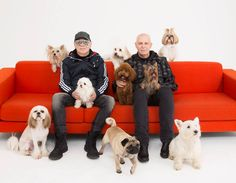 """""""When I get back to my small flat, I want to hear somebody bark"""" (I want a Dog, Pet Shop Boys)"""