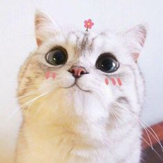 Find images and videos about cute, cat and kawai on We Heart It - the app to get lost in what you love. Cute Kittens, Cats And Kittens, Crazy Cat Lady, Crazy Cats, Cute Baby Animals, Funny Animals, Cute Cat Memes, Cat Aesthetic, Kawaii Cat