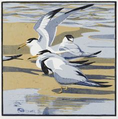 "Robert Greenhalf (British, b. - ""Little terns"" - Woodcut Linocut Prints, Art Prints, Block Prints, Merian, Bird Illustration, Wood Engraving, Wildlife Art, Print Artist, Gravure"