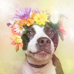 """Flower Power, Pit Bulls Of The Revolution"" by Sophie Gamand"