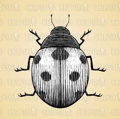 illustration by cidepix #drawing #vectorillustration #illustration #design #designs #vector #vectors #clipart #ink #scratchboard #ladybug #ladybugs