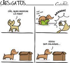 Um Sábado Qualquer | Cães e Gatos
