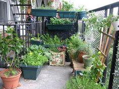 365 coisas que posso fazer...: 195 - Ter uma horta... na varanda