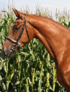Paarden make up | Glamhorse