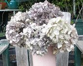 Dried hydrangea flowers- ivory/ purple tones- long stems for vase- real dried flowers- shabby chic bouquet