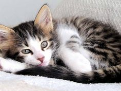 I want this kitten!