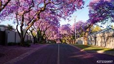 Early morning sunrise timelapse of city streets with pretty Jacaranda trees and flowers scattered as people walking past while shadows move across, Pretoria, South Africa, 4K 25p #TLSA #wedoallthingstimelapse #stock #stockfootage #timelapse #southafrica Jacaranda Trees, Morning Sunrise, City Scene, Pretoria, City Streets, Early Morning, Stock Video, High Quality Images, Stock Footage