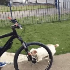 How to make your bikeride to work better 🐶