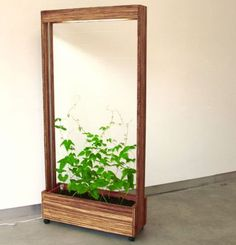 """The Bean Screen is, quite simply, a spatial divider where a green medium - beans in this case - provide the visual screen from one side to the other. The artist points out that """"traditionally, vegetables gardens are thought of as utilitarian, and the potential beauty of vegetable plants ignored  ..."""