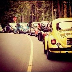 Coccinelle, in line #fusca #bettle