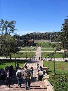 Bruin Walk, UCLA Campus, Los Angeles, CA.  Photo: mbudisic, via Flickr