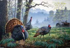 'Foggy Morning Trio - Wild Turkey' (by artist Larry Zach)