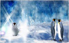 Penguins, Animals, Animales, Animaux, Penguin, Animal, Animais