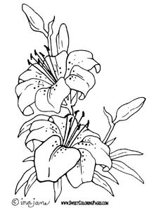 Embroidery patterns simple coloring pages 46 Ideas Flower Coloring Pages, Coloring Book Pages, Material Flowers, Digital Stamps, Fabric Painting, Colorful Pictures, Colorful Flowers, Embroidery Patterns, Ribbon Embroidery
