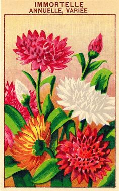 French Flower Seed Packet