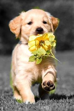 A puppy AND flowers?!?! It's too much!!!