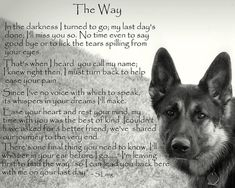 The Effective Pictures We Offer You About Blind dog hacks A quality picture can tell you many things. You can find the most beautiful pictures that can be presented to you about Blind dog tips in this Dog Poems, Dog Quotes, Animal Quotes, Pet Loss Quotes, Poems About Dogs, Dog Sayings, Animal Signs, Animal Fun, I Love Dogs