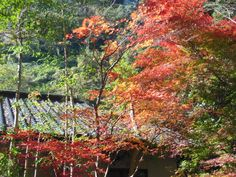 View of Fall... This year, it was pretty much miraculous that it was the scene of the fall in the area. It used to be famous for beautiful scene, thought...