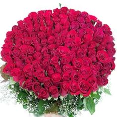 Red roses bunch for valentine day