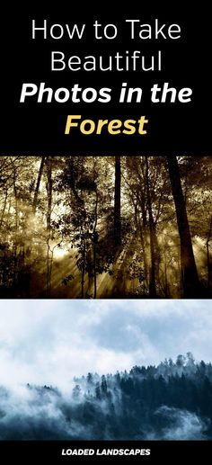 How to Take Beautiful Photos in the Forest. Photography tips for amazing photos of trees. Landscape, nature, photograph, composition, tutorial, camera, gear, perspective, mood, fog, weather, lighting. #naturephotography #photographytips