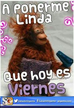 Ideas Memes En Espanol Buenos Dias Viernes For 2019 Funny Quotes, Funny Memes, Hilarious, Travel Couple Quotes, Spanish Jokes, Spanish Class, Mean Humor, Weekday Quotes, Memes In Real Life