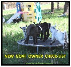New Goat Owner Check-List + Goat Toys