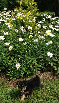 Chloe at Botanic Garden Morgantown, WV
