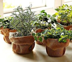 Plant a DIY Herb Garden with these cheap & easy ideas. From potted herb gardens to repurposed planter ideas, there are many ways to create a herb garden! Diy Herb Garden, Edible Garden, Garden Ideas, Garden Inspiration, Garden Pots, Deco Cactus, Herb Centerpieces, Wedding Centerpieces, Wedding Decorations