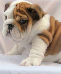 So chubby