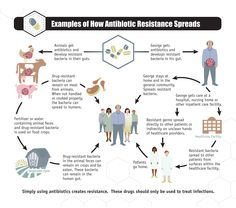 Corrected: How antibiotic resistance spreads. #Infographic