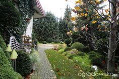 Ogród nie tylko bukszpanowy - część III - strona 800 - Forum ogrodnicze - Ogrodowisko