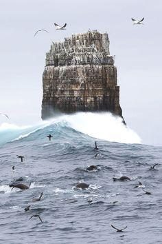 pinterest.com/fra411 #ocean