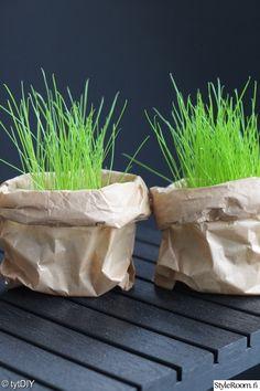 Easter Bunny, Grass, Planter Pots, Herbs, Diy, Spring, Food, Ideas, Bricolage
